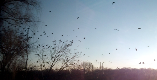 crows-02-2013-1