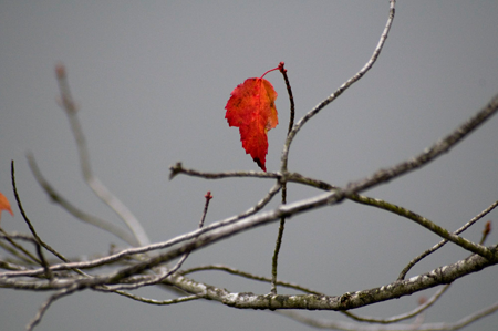 A lone red leaf at the end of autumn